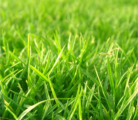 Grass Grower - Lawn Top Dressing
