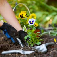 Gardening tips for the winter and in the spring