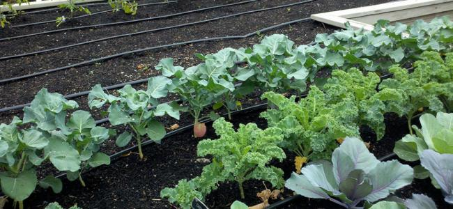 The growth of vegetables and the quality of soil required